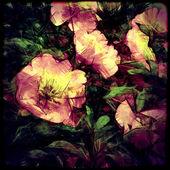 Blumen hintergrund kunst — Stockfoto