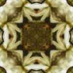 Art nouveau ornamental vintage pattern — Stock Photo #42377959
