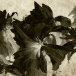 Stock Photo: Art floral vintage balck and white background with asters