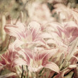 Art floral vintage sepia background with light pink lilies — Stock Photo #42382851