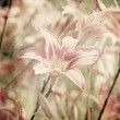 Art floral vintage sepia background with light pink lilies — Stock Photo #42382885