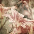 Art floral vintage sepia background with light pink lilies — Stock Photo #42382949