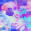 Art floral vintage violet, blue and pink background with white asters — Stock Photo #42383645