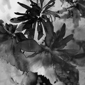 Art floral vintage balck and white background with asters — Stock Photo