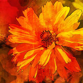 Art floral vintage orange, red and brown background with asters — Stock Photo
