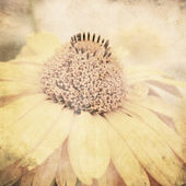 Art floral vintage sepia background — Stock Photo