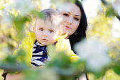 In the blossom garden — Stock Photo