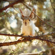 Funny squirrel - 图库照片
