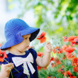 Toddler gathering poppies — Stock Photo