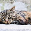 Cute sleeping cat — Stock Photo