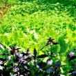 Green in garden — Stock Photo