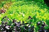 Vert jardin — Photo