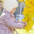 Toddler girl near fall tree — Stock Photo
