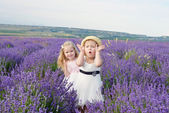 Fun in field — Foto Stock