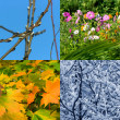 Seasons background — Stock Photo