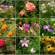 Collection of flowers - Stock Photo