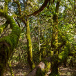 Rainforest in La Gomera island - Canary Spain — Stock Photo
