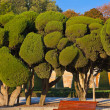 Stock Photo: Trees at Retiro park - Madrid