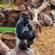Gorilla monkey in park at Tenerife Canary — Foto Stock