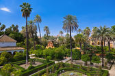 Real alcazar gärten in sevilla spanien — Stockfoto