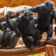 Monkeys in park at Tenerife Canary - Stock Photo