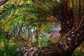 Jungle park at Tenerife Canary — Stock Photo