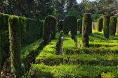 Maze at Real Alcazar Gardens in Seville Spain — Stock Photo