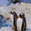 Penguins — Stock Photo #31982263