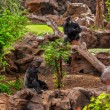 Gorilla monkey in park at Tenerife Canary — Foto de Stock