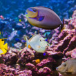 Fishes and corals reef — Stock Photo