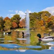 Ducks in pond near Crystal Palace - Madrid — Stock Photo