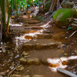 Pathway in jungle - Vallee de Mai - Seychelles — Stock Photo #33624041