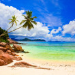 Palms on tropical beach — Stock Photo