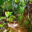 Pathway in jungle - Vallee de Mai - Seychelles — Stock Photo #34433869