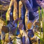Fishes and corals reef in Aquarium — Stock Photo