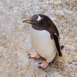 Penguin — Stock Photo #35293927