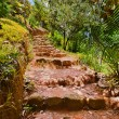 Pathway in jungle - Vallee de Mai - Seychelles — Stock Photo #35858675