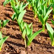 Plants in land — Stock Photo #4065485