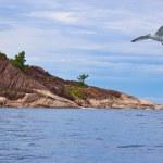 Tropical island La Digue - Seychelles — Stock Photo #50688397