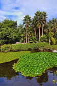 Pond in park at Tenerife - Canary Spain — Stock Photo