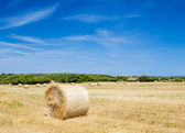 Straw roll bale on the farmland in sunny day at Menorca, Spain. — Stock Photo