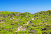 Cami de Cavalls walking path going around Menorca island. — Stock Photo