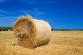 Straw roll bale on the farmland with the clear blue sky — Stock Photo