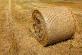 Straw roll bale on the farmland in sunny day — Stock Photo