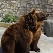Brown bear in the Moscow zoo — Stock Photo #1472686