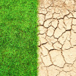 Cracked ground and grass — Stock Photo
