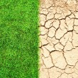 Stock Photo: Cracked ground and grass