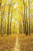 Forestal — Foto de Stock