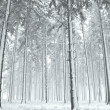 Stock Photo: Panoramof winter forest with trees covered snow