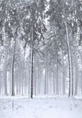 Panorama of winter forest with trees covered snow — Stock Photo